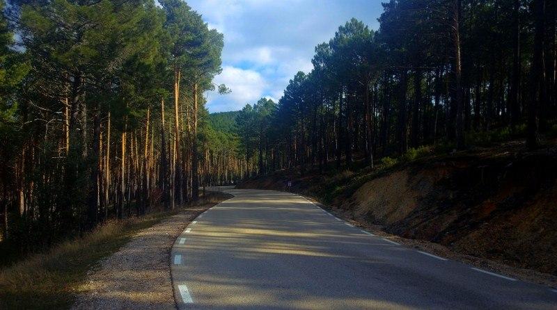 Paseo por los bosques de Navaleno