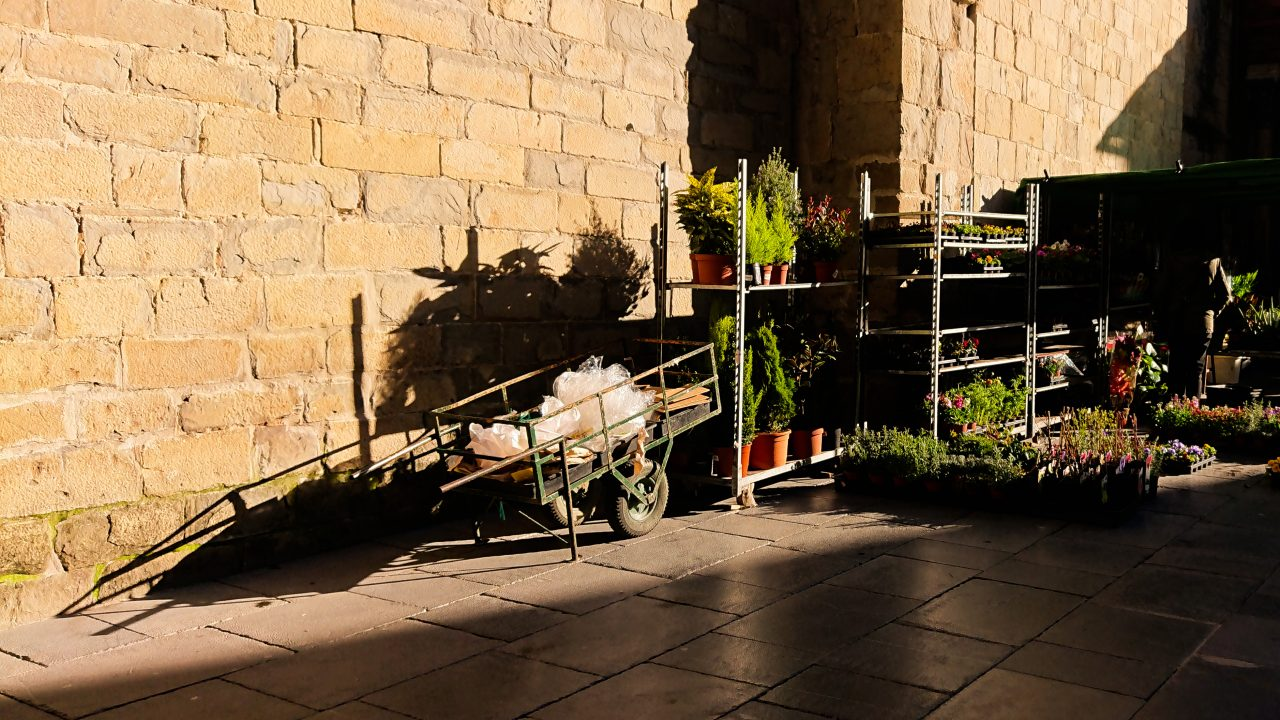 Mercado de plantas